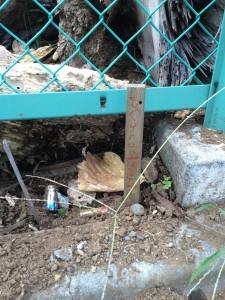 モグラのお墓 墓標付き